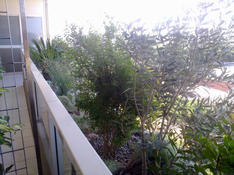 Giardini pensili casamassima giardiniere berardino for Realizzazione giardini pensili