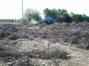 RISANAMENTO DI LAME, FORESTE E MACCHIE MEDITERRANEE CON OPERE DI INGEGNERIA NATURALISTICA