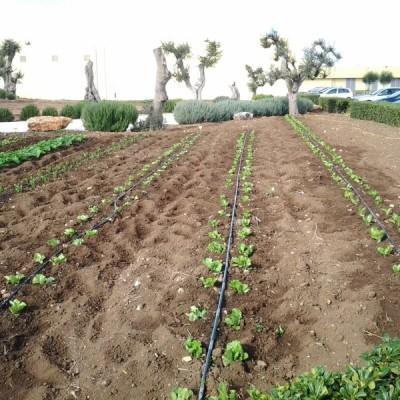 1. Allestimento orto Puglia