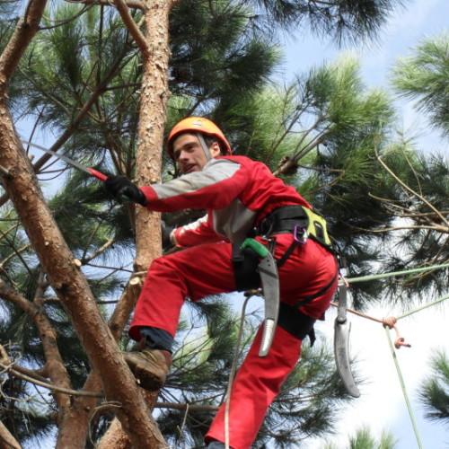 1.Tree climbing Casamassima