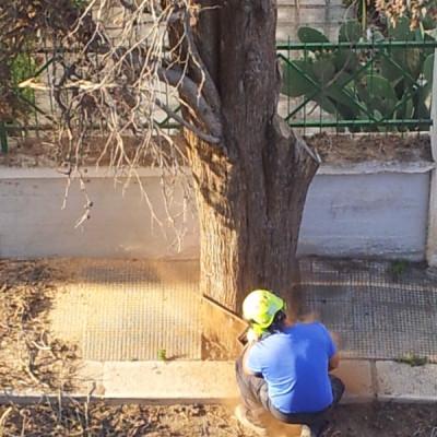 Abbattimento alberi Bari