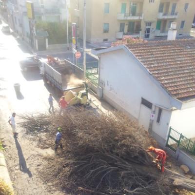 Abbattimento alberi alto fusto Bari