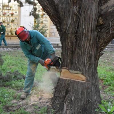 Abbattimento alberi controllato