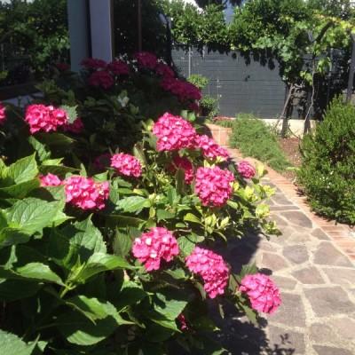 Giardino fiorito Casamassima