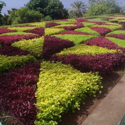Giardino pubblico 7