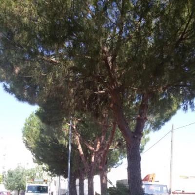 Potatura alberi Casamassima