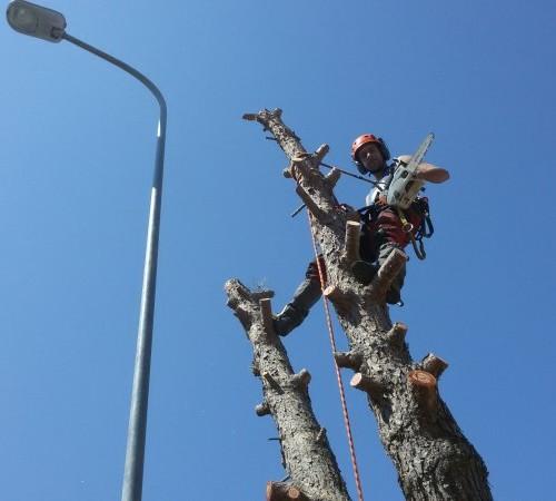 Potatura alberi ad alto fusto Bari 2