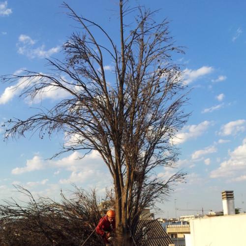 Potatura alberi ad alto fusto Bari