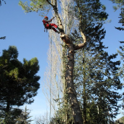 Potatura in Tree Climbing 3