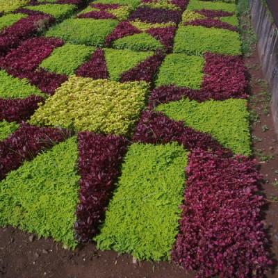 Realizzazione verde pubblico Puglia