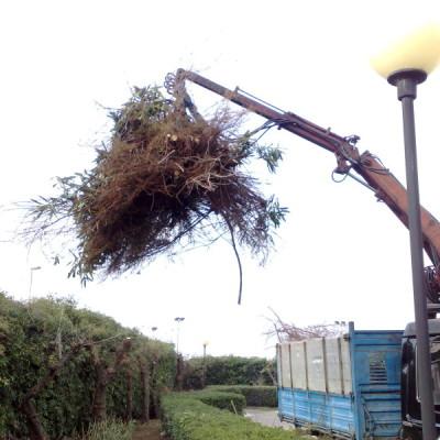 smaltimento rifiuti legnosi così come la normativa prevede (1)