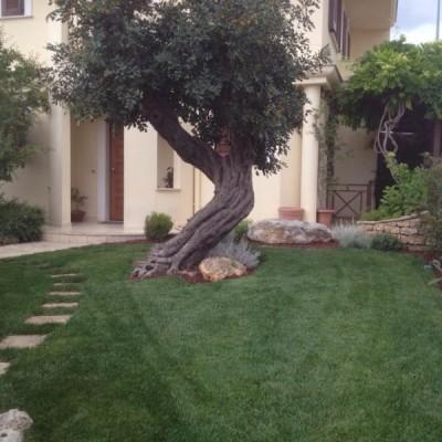 ulivo Puglia