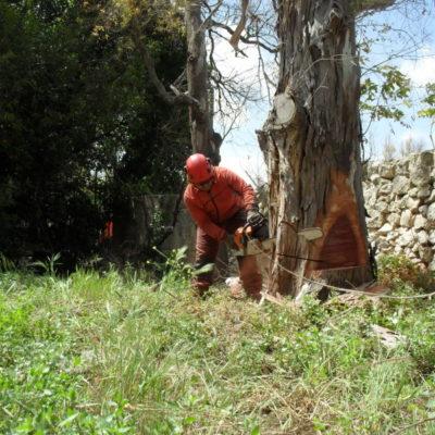 Abbattimento Controllato Alberi - Casamassima Bari (1)
