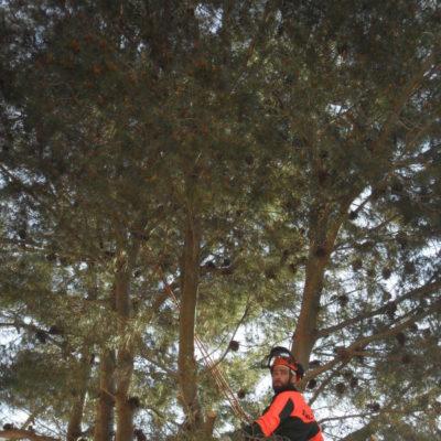 Tree Climbing - Casamassima Bari (2)