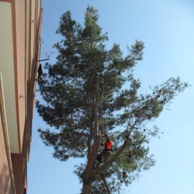 Tree Climbing - Casamassima Bari (3)